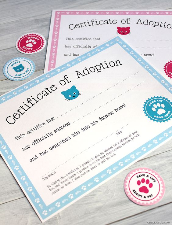 Free Cat Adoption Printable | Cat Party Ideas